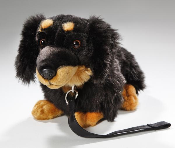 Dachshund Dog sitting black with lead
