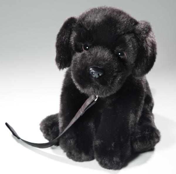 Labrador schwarz mit Leine sitzend