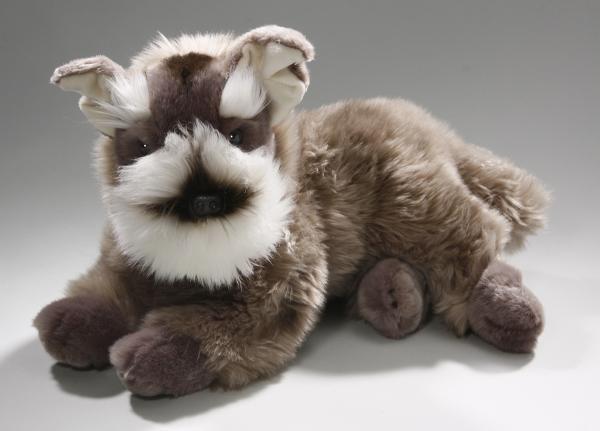 Schnauzer Terrier Dog