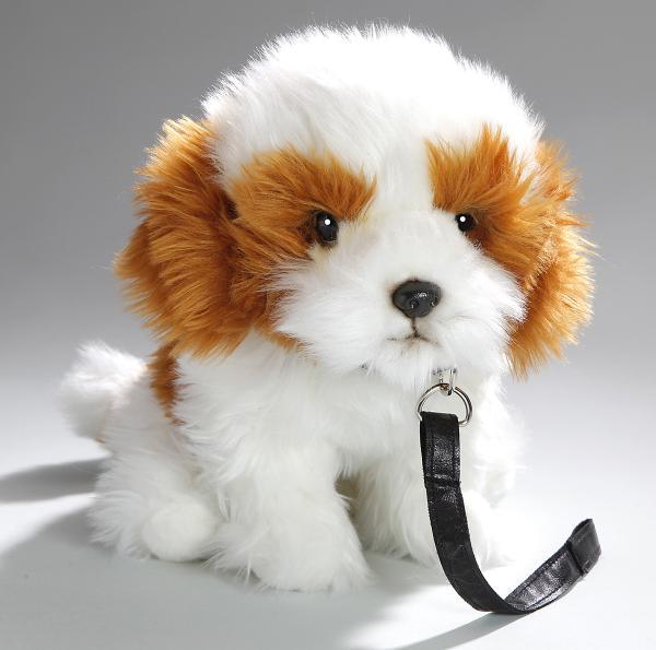 Shih Tzu Hund sitzend mit Leine
