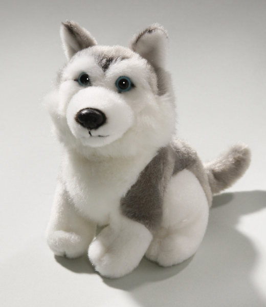 Husky grey sitting