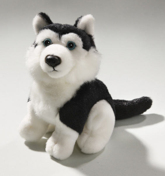 Husky black sitting