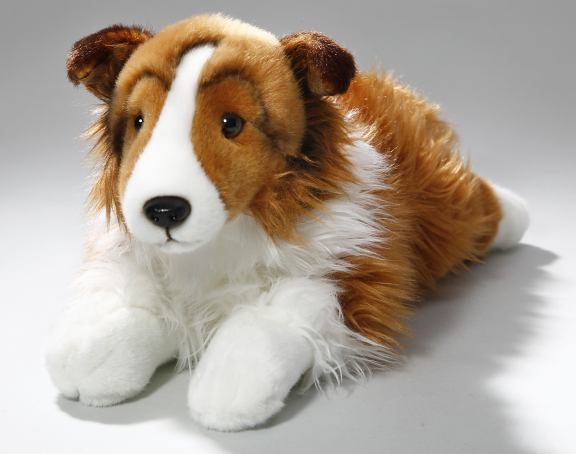 Shetland Sheepdog (Collie) white-brown lying