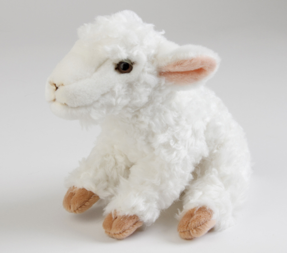 Sheep, Lamb white
