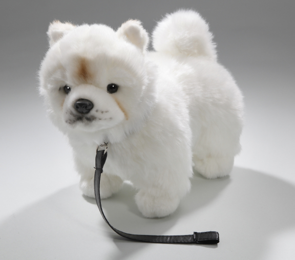Chow-Chow standing with lead