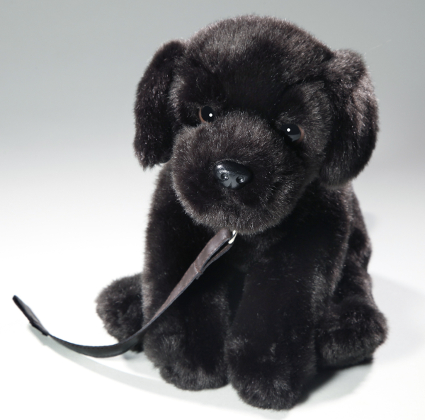 Labrador black with lead sitting