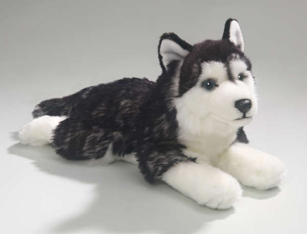 Husky black lying