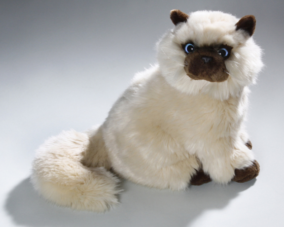 Cat Persian, Siam, beige