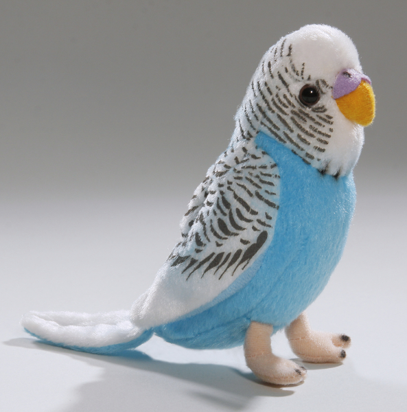 Budgerigar with sound dark blue