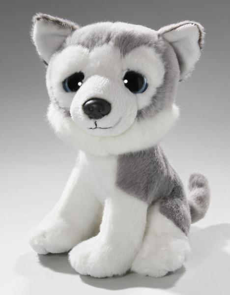 Husky mit großen Augen sitzend