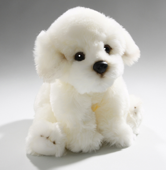 Bichon Dog sitting