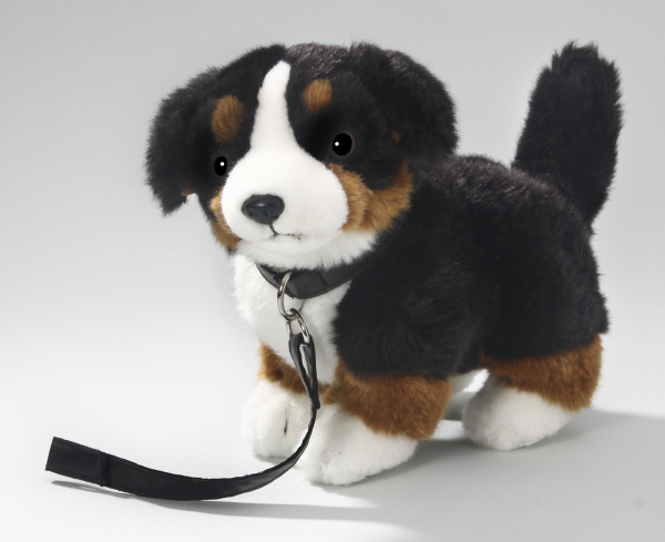 Bernese Mountain Dog standing with lead