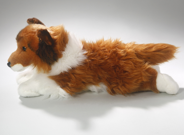 Shetland Sheepdog (Collie) brown-white lying