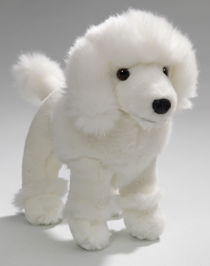 Poodle white standing