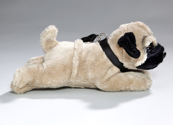 Pug Dog lying with lead