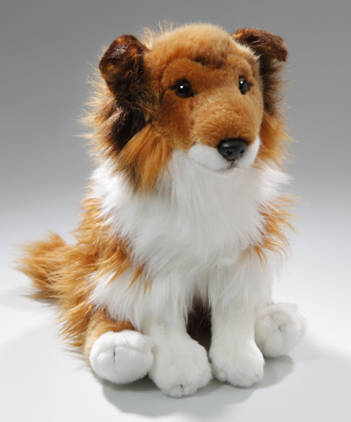 Shetland Sheepdog (Collie) brown-white sitting