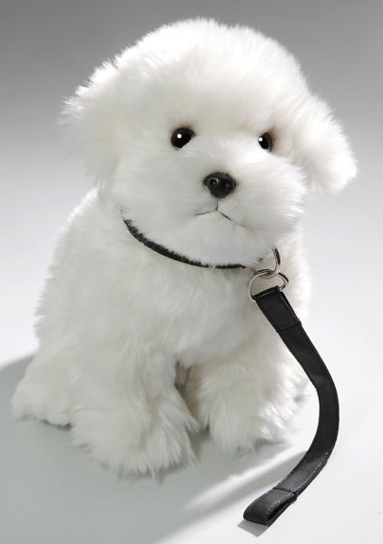 Maltese Dog sitting with lead
