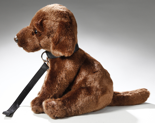Labrador brown with lead sitting