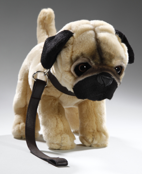Pug standing with lead