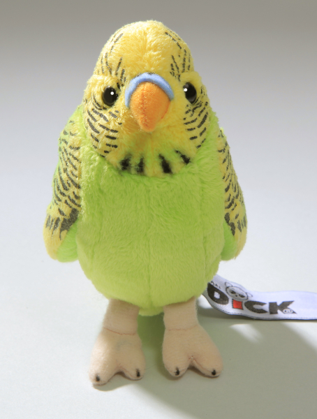 Budgerigar green with yellow