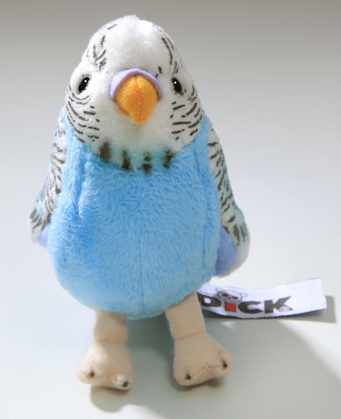 Budgerigar dark blue