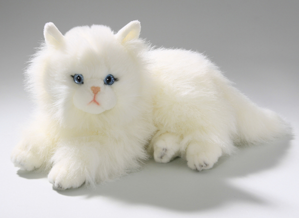 Cat, Persian lying white