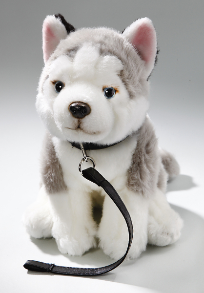 Husky sitting with lead